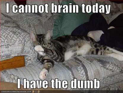 lolcat-brain-today-415.jpg