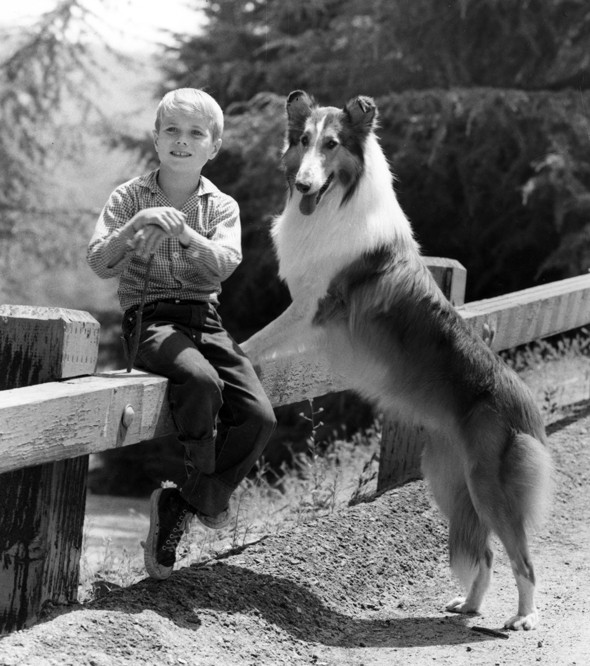 Five Pets That Made Their Owners Rich