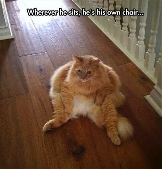 hilarious pictures of fat cats - photo #26