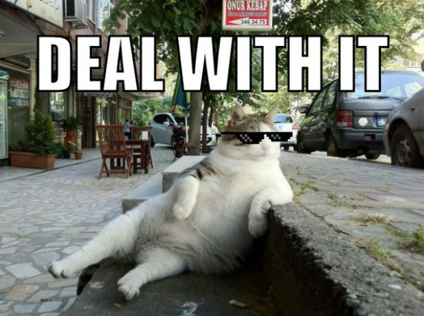 deal-with-it-cat11.jpeg