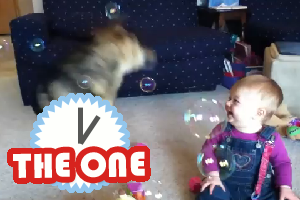 baby and dog laughing at bubbles
